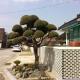 예쁜 나무..