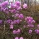 봄꽃들 좀 보세요.